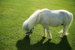 an image of a single white pony