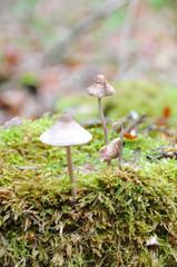 mycène en casque
