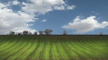 Agriculture field, environment concept