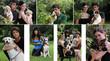 Cani di razza e abbandonati - 26923826