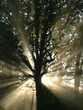 Fototapeten,nebel,licht,sonnenaufgang,baum