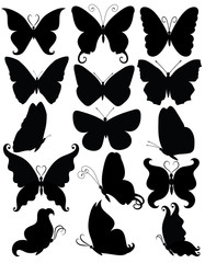 Many butterflies.