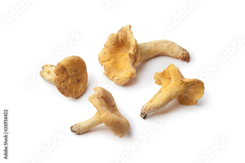 Fresh yellow chanterelles mushrooms