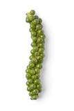 String of fresh green unripe pepper poster