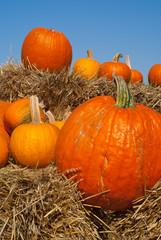 Orange pumpkins on hay bales with blue sky backdrop