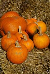 Group of orange pumpkins on brown hay bales