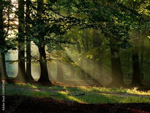 Fototapeten,sonnenstrahl,natur,landschaft,wald