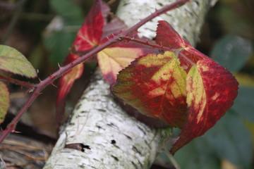 Herbstliche Färbung