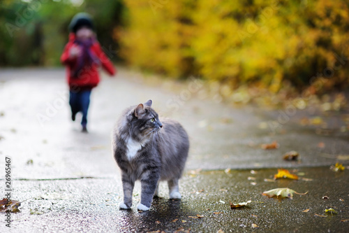 Grey cat and a child on autumn day