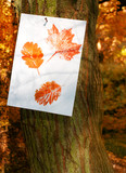 Autumn Leaf Prints