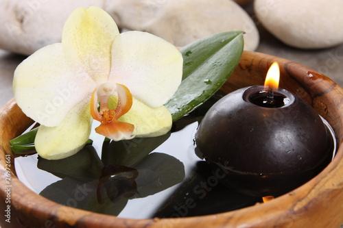 la flamme et l orchidée - 26972661