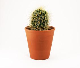 Kaktus im Keramiktopf
