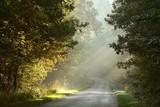 Rural road through the misty autumn forest at sunrise - 26975049