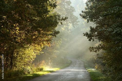 Fototapeta Rural road through the misty autumn forest at sunrise