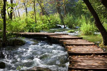 fototapeta sceneria Forest Stream