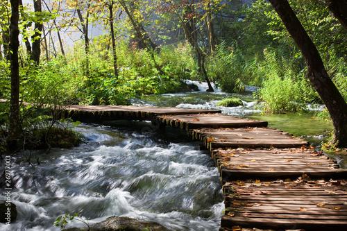 Aluminium Meest verkochte foto's Forest Stream Scenery