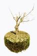 albero secco su terreno arido
