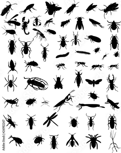 collection of 60 bugs - vector