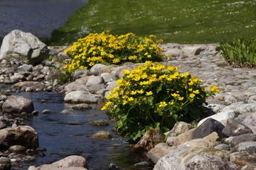 Gelbe Blütenpracht