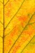 Herbstblatt | autumn foliage