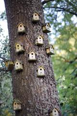 Bird homes