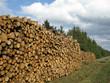 Großer Holzstapel am Waldrand
