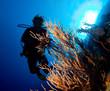 Woman diver's silhouette over the sun