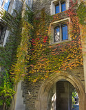 Ivy covered College building