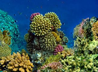 Landscape under water