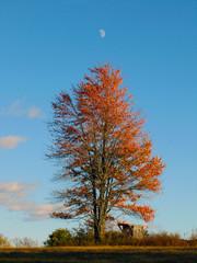 Moon in fall