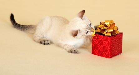 Kitten with gift.