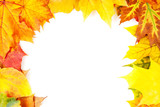 autumn; autumnal; background; beautiful; botany; bright; teil; m poster