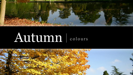 autumn colour montage