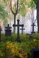 cemetary in fog in autumn