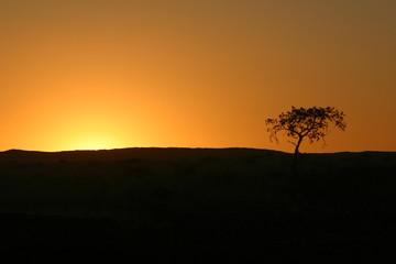 Tramonto nella savana con albero