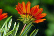 Orange flower over green