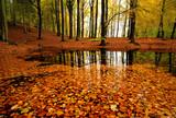 Fototapety Autumn forrest