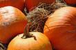Orange pumpkins in hay