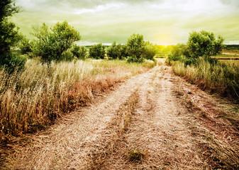 paisaje rural con campo de trigo y camino