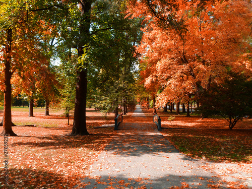 canvas print picture Tower Grove Orange