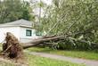Leinwanddruck Bild - Wind Storm Damage
