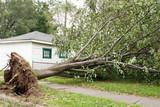 Wind Storm Damage poster