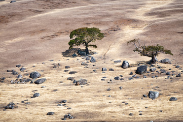 Two trees and rocks on a sueded hill