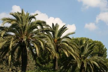 Palmeraie en Espagne