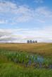 Four grain bins stand in the distance on a prairie field