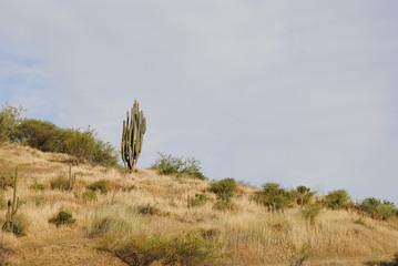 Paisaje agreste, cactus.