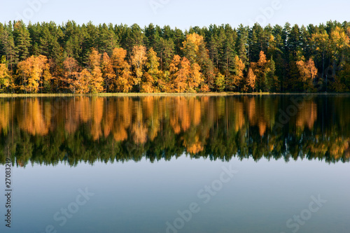 Autumn forest reflection