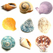 Colorful seashells on a white background