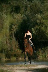Hoch zu Pferde