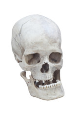 real male skull